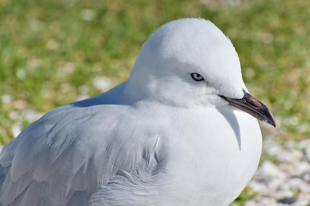 Close de uma gaivota em um terreno coberto de grama durante o dia