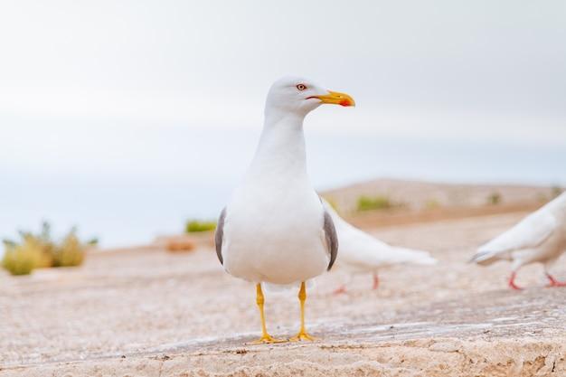 Close de uma gaivota em uma praia arenosa