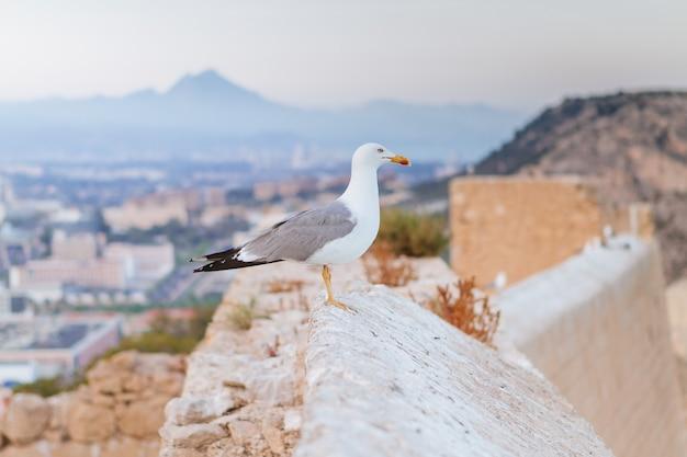 Close de uma gaivota empoleirada em uma parede sob a luz do sol com uma cidade