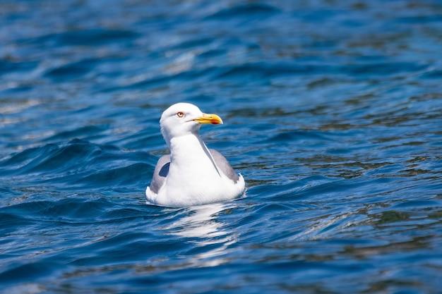 Close de uma gaivota nas águas azuis do mar