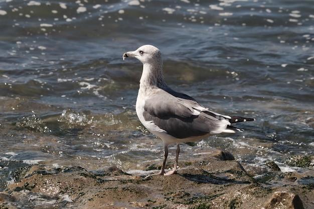Close de uma gaivota perto da água