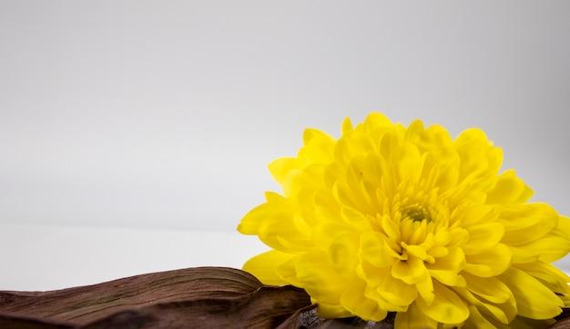 Close de uma grande flor amarela