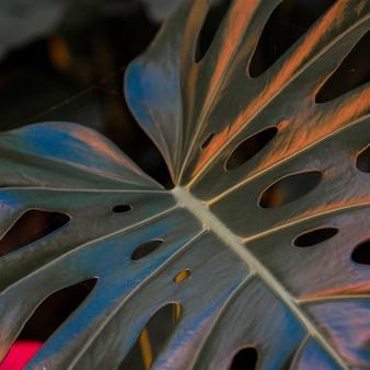 Close de uma grande folha de planta com buracos