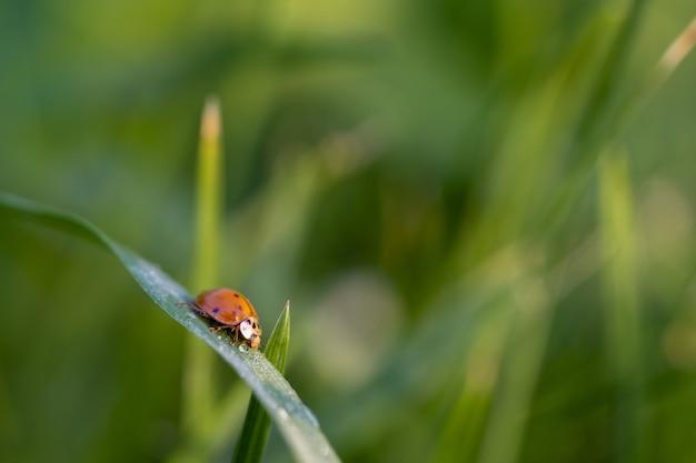 Close de uma joaninha em uma folha verde
