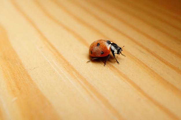 Close de uma joaninha fofa em uma superfície de madeira