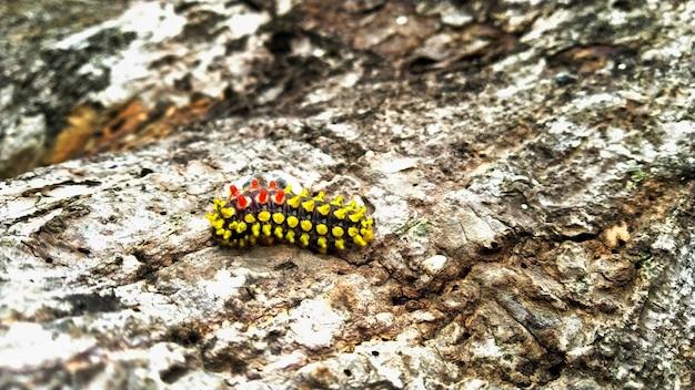Close de uma lagarta colorida rastejando