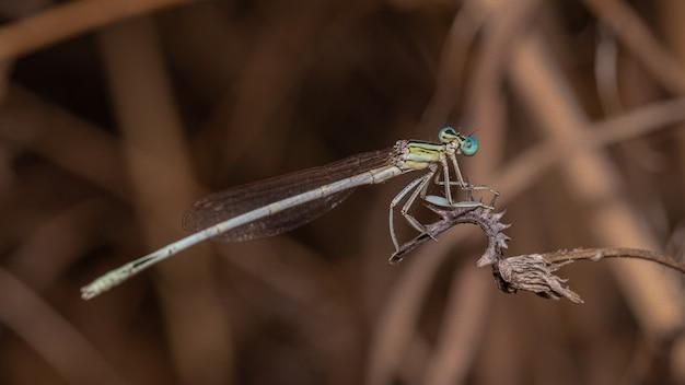 Close de uma libélula em uma planta em um campo sob a luz do sol