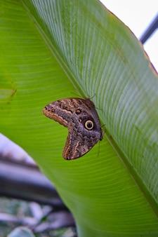 Close de uma linda borboleta sentada em uma folha de planta
