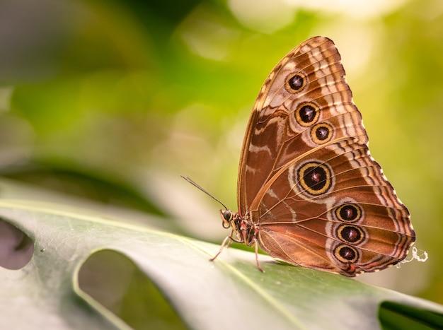 Close de uma linda borboleta sentada em uma folha verde