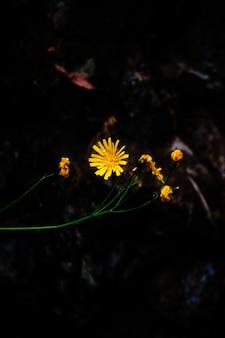 Close de uma linda flor amarela em uma floresta