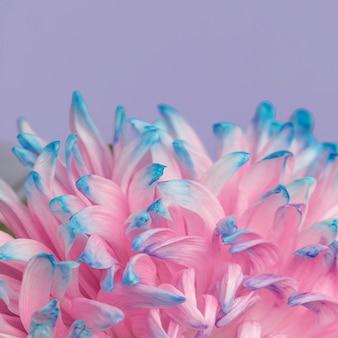 Close de uma linda flor rosa e azul