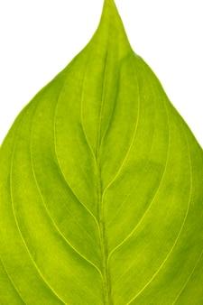 Close de uma linda folha verde