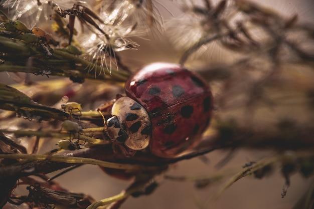 Close de uma linda joaninha nas folhas em uma floresta