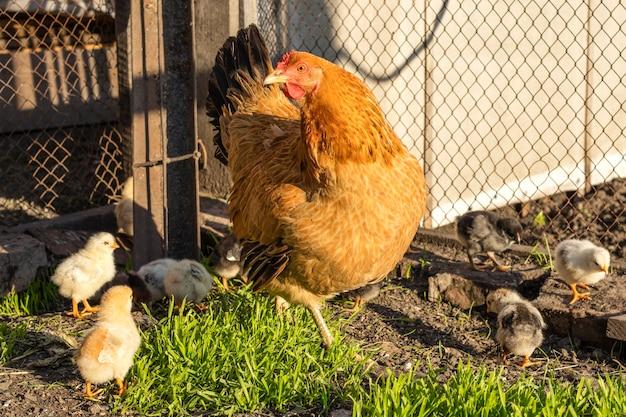 Close de uma mãe de filhote com seus filhotes na grama