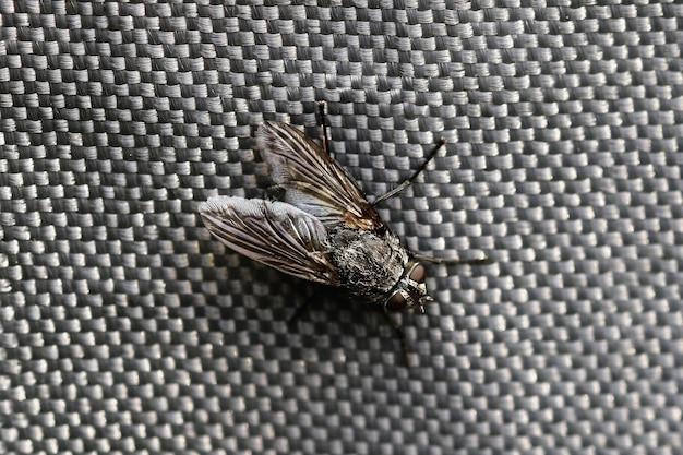 Close de uma mosca em uma superfície cinza sob as luzes