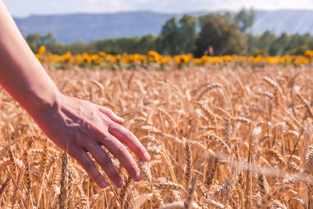 Close de uma mulher em um campo de trigo em um dia ensolarado