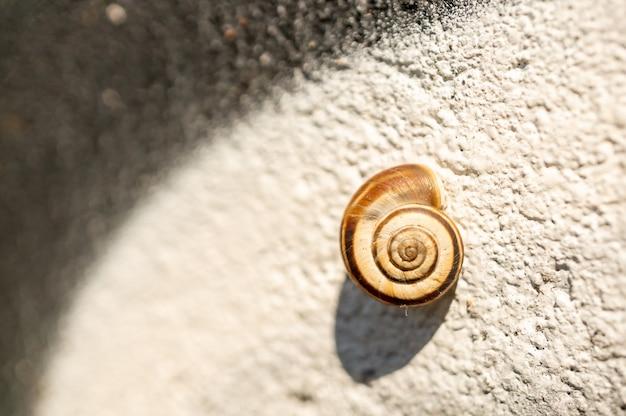 Close de uma pequena concha de caracol na parede sob a luz do sol com um fundo desfocado