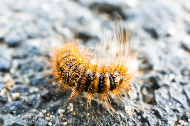 Close de uma pequena lagarta no chão sob a luz do sol com um fundo desfocado