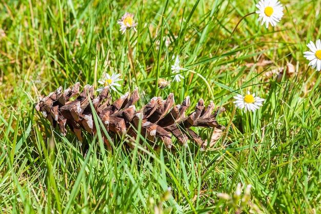 Close de uma pinha no chão coberta de flores e grama sob a luz do sol