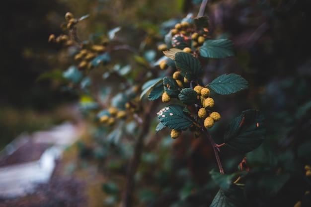 Close de uma planta com flores amarelas