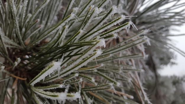 Close de uma planta verde coberta de geada branca