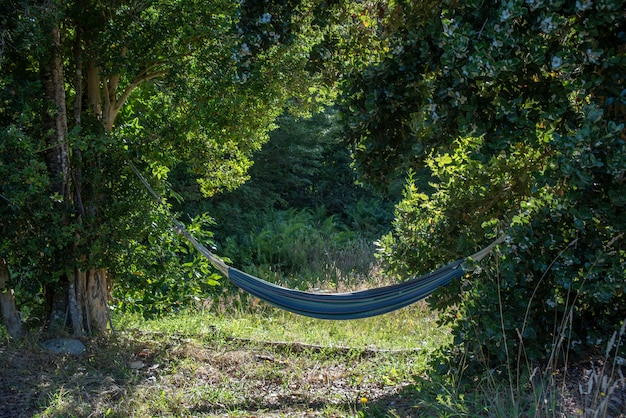 Close de uma rede azul presa a árvores em uma floresta sob a luz do sol