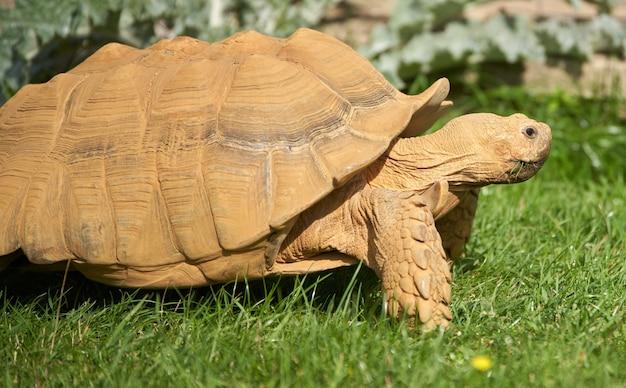 Close de uma tartaruga no zoológico