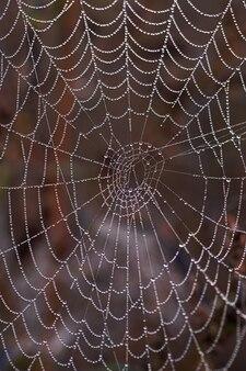 Close de uma teia de aranha com orvalho da manhã
