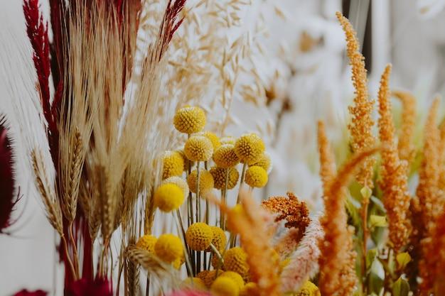 Close de várias flores amarelas secas