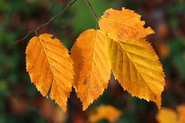 Close de várias folhas amarelas