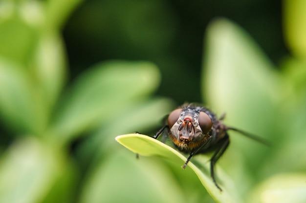 Close detalhado de uma mosca doméstica em uma folha