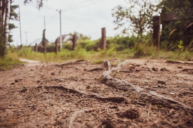 Close do caminho da floresta com cones e raízes ponto de vista baixo na paisagem da natureza ambiente ecológico