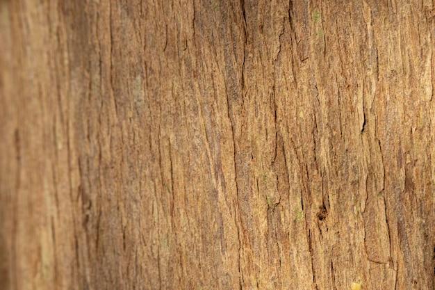 Close do fundo orgânico da casca da árvore