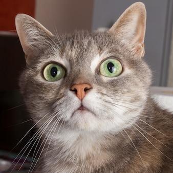 Close do rosto de gato com olhos verdes
