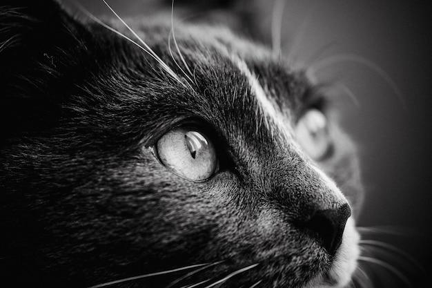 Close do rosto fofo de um gato