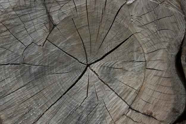 Close do toco de árvore