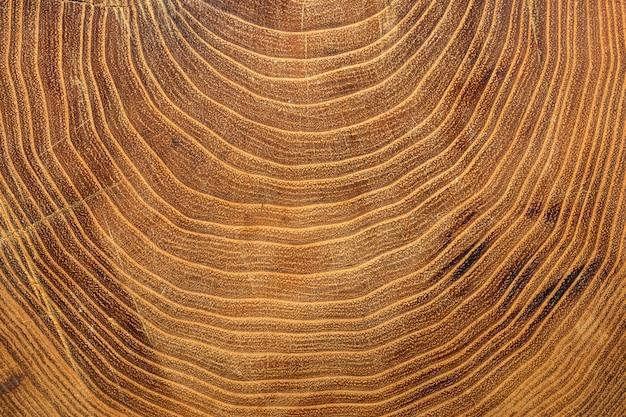 Close dos anéis de crescimento na árvore