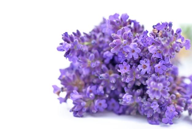 Close em flores de buquê de lavanda isolado na superfície branca