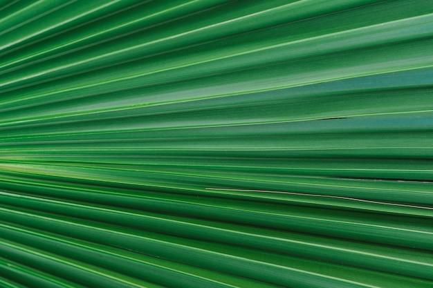 Close em folha de palmeira