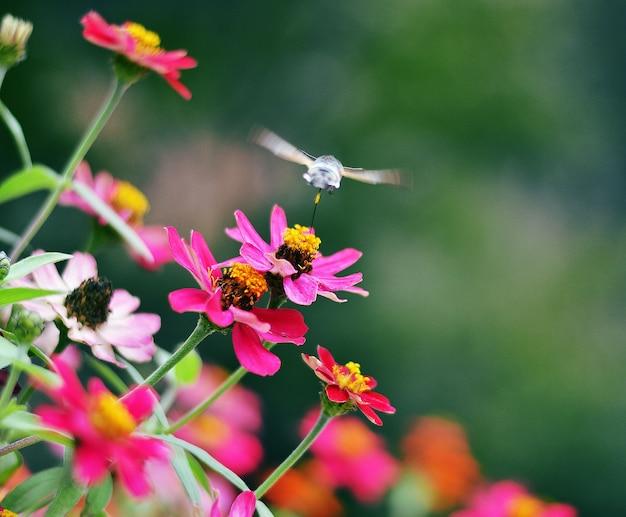 Close em lindas flores com abelhas