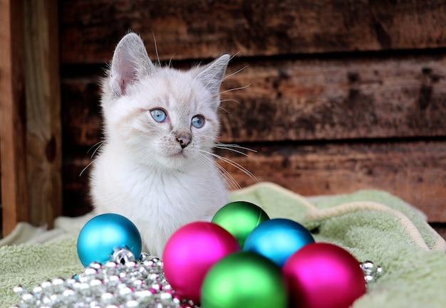 Close horizontal de um gato balinês branco e brinquedos para a árvore de natal