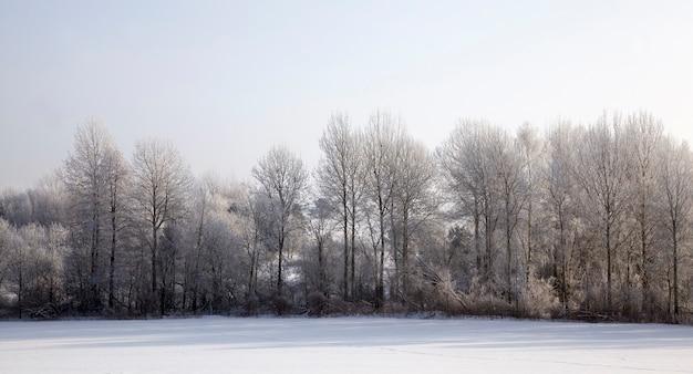 Close na floresta de inverno