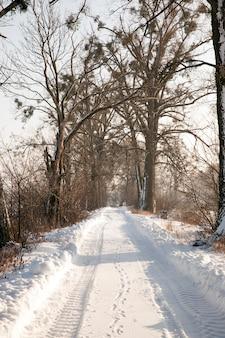 Close na queda de neve no inverno