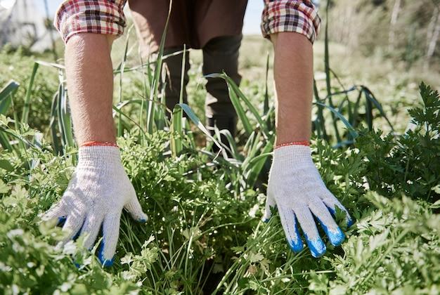 Close no homem cuidando do jardim dela