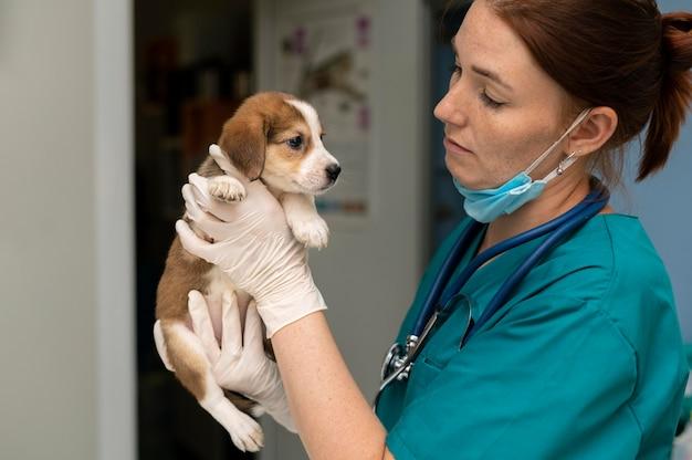 Close no veterinário cuidando do cachorro Foto gratuita