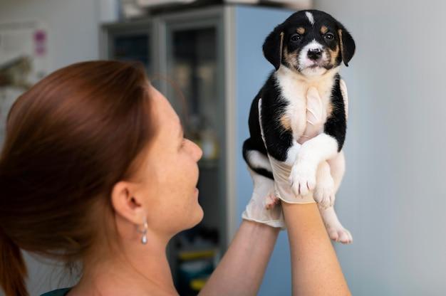 Close no veterinário cuidando do cachorro