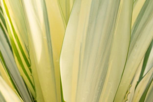 Close-up agave do caribe deixa detalhes