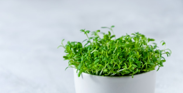 Close-up agrião microgreens