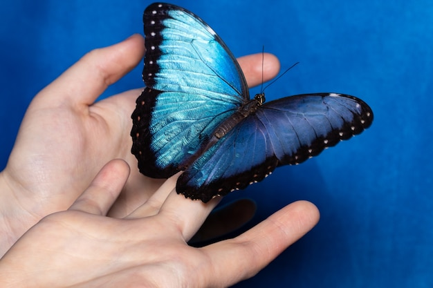 Close-up borboleta na mão da mulher