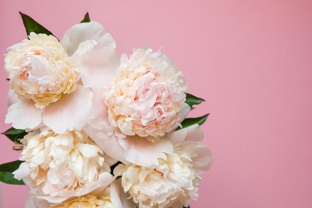Close-up branco bonito do ramalhete da peônia na cor-de-rosa. vista do topo. lay plana